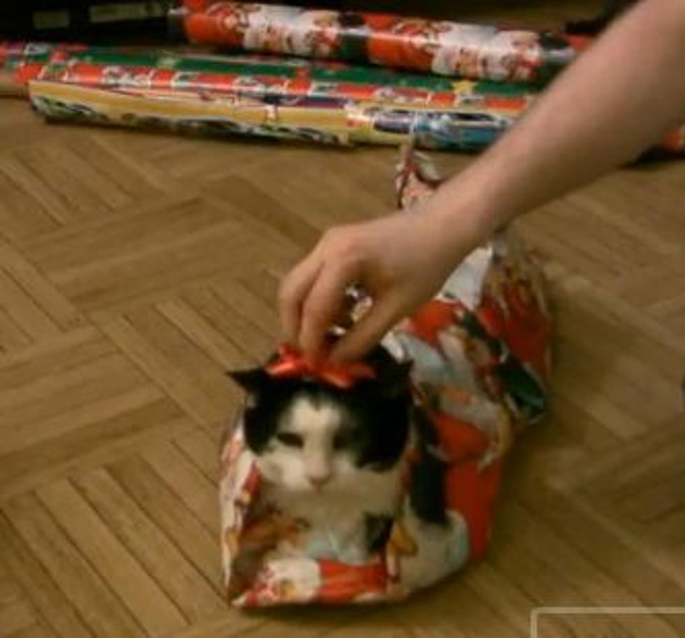christmas wrapping lessons how to wrap a cat video - How To Wrap A Cat For Christmas